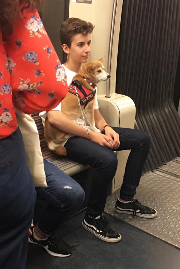 柴犬 パリ 観光