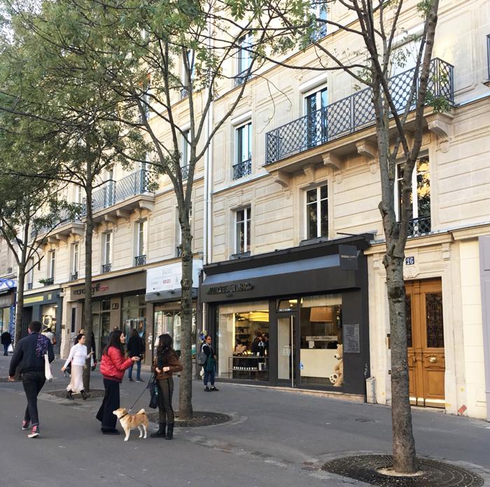 パリ 柴犬