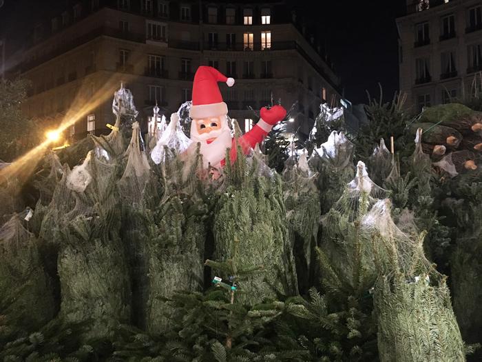 パリ もみの木